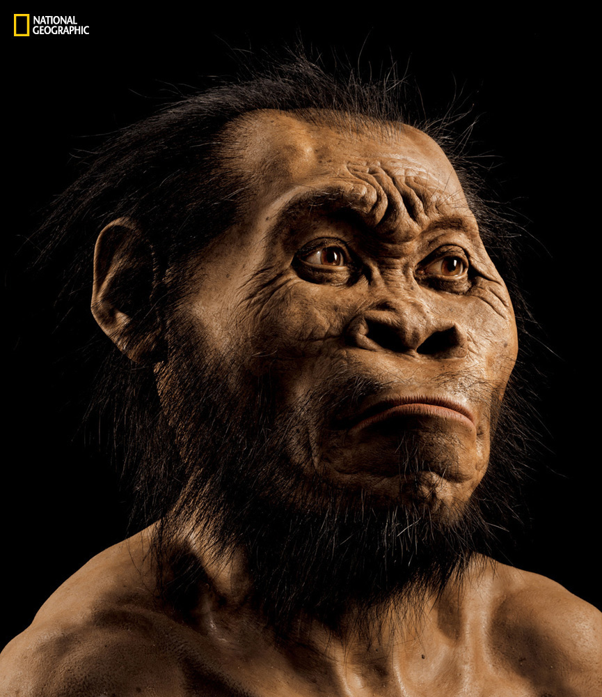 homo_naledi_national_geographic.jpg
